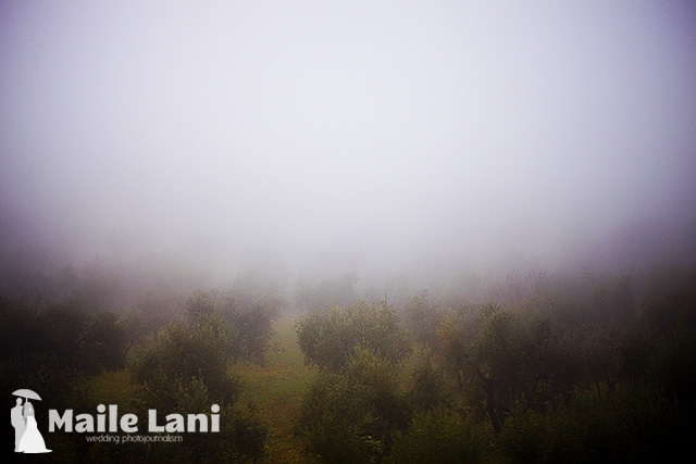 Leaving Rieti Olive Trees