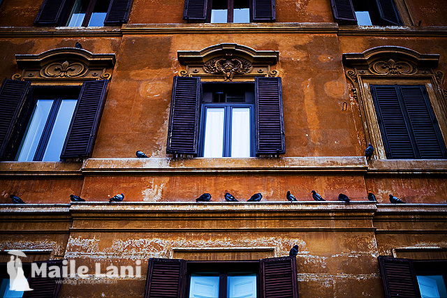 Rome: Piegons on The Wall