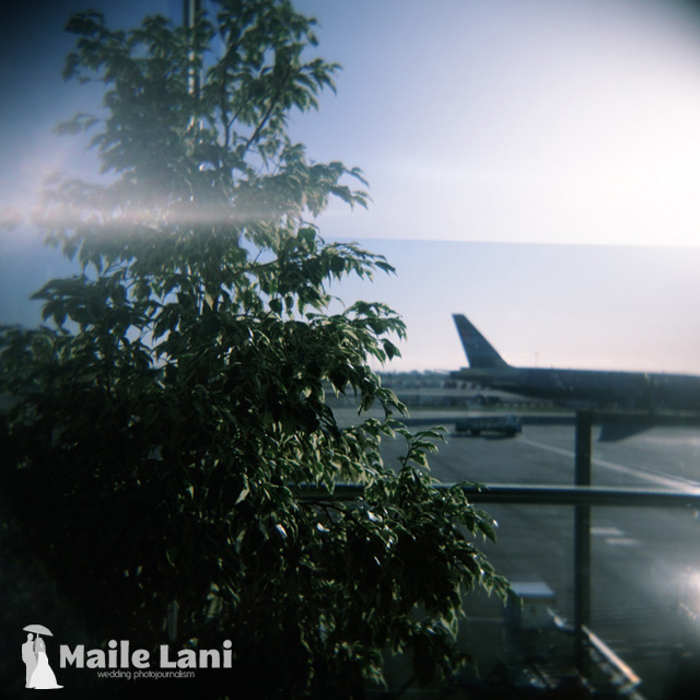 Airplane and Tree