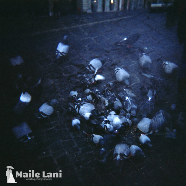 Attack of the Angry Pigeons