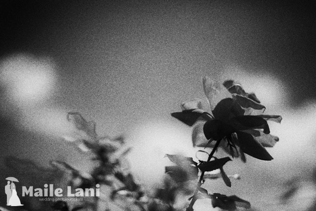 A Black and White Film Flower