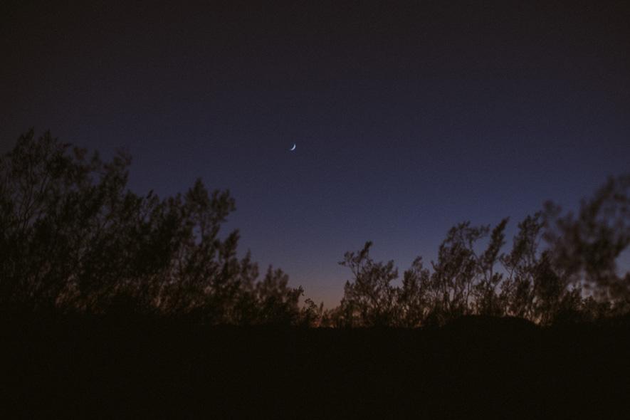 002_saguaro_cactus_phoenix_arizona