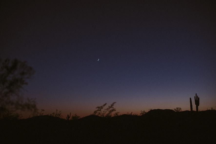 003_saguaro_cactus_phoenix_arizona