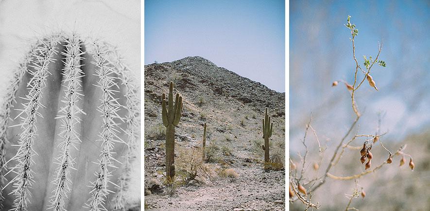 005_saguaro_cactus_phoenix_arizona