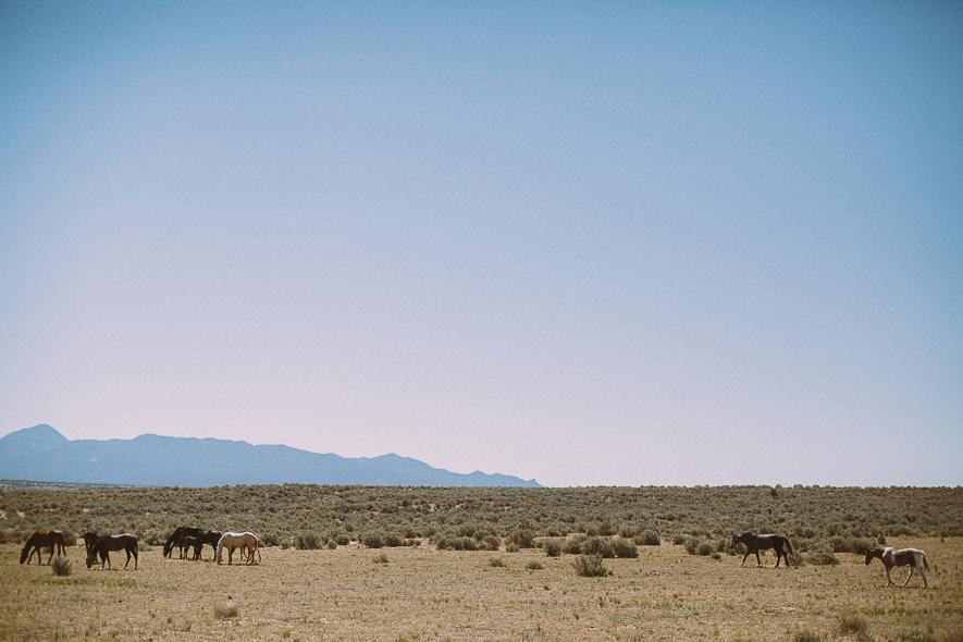 005_utah_wild_horses