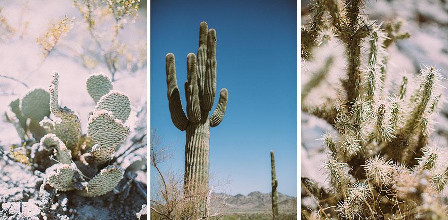007_saguaro_cactus_phoenix_arizona
