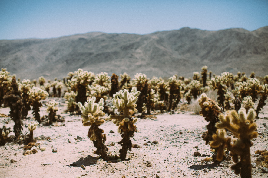 009_joshua_tree_national_park