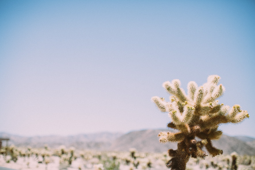 010_joshua_tree_national_park