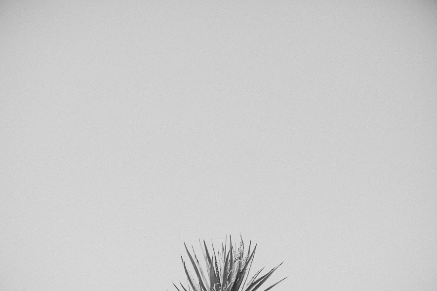 014_joshua_tree_national_park