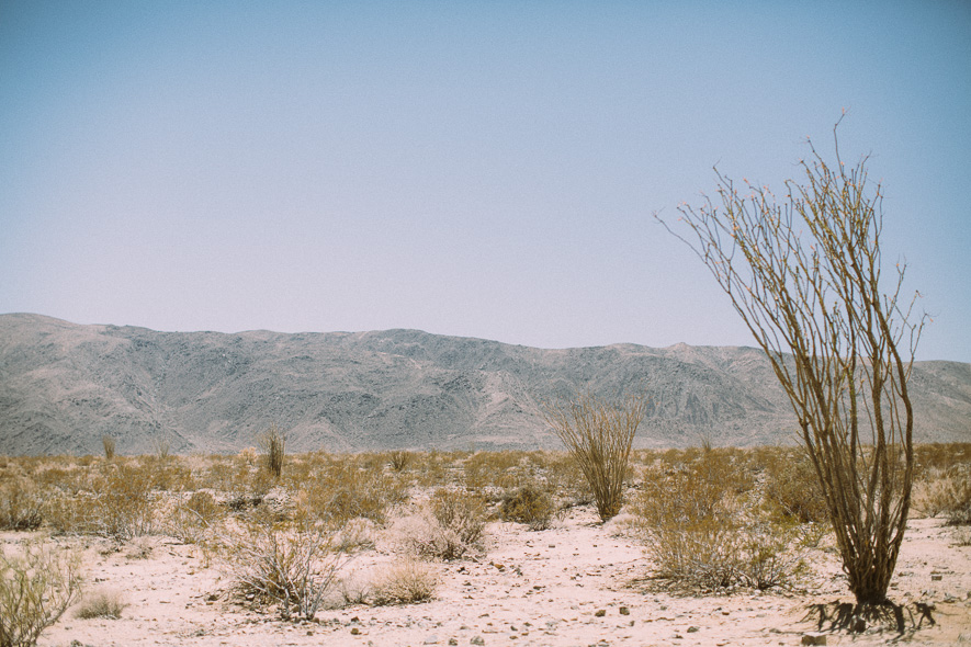 015_joshua_tree_national_park