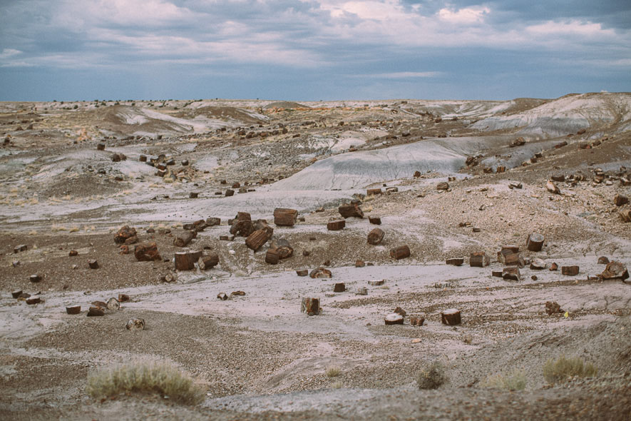 015_petrified_forest_national_park
