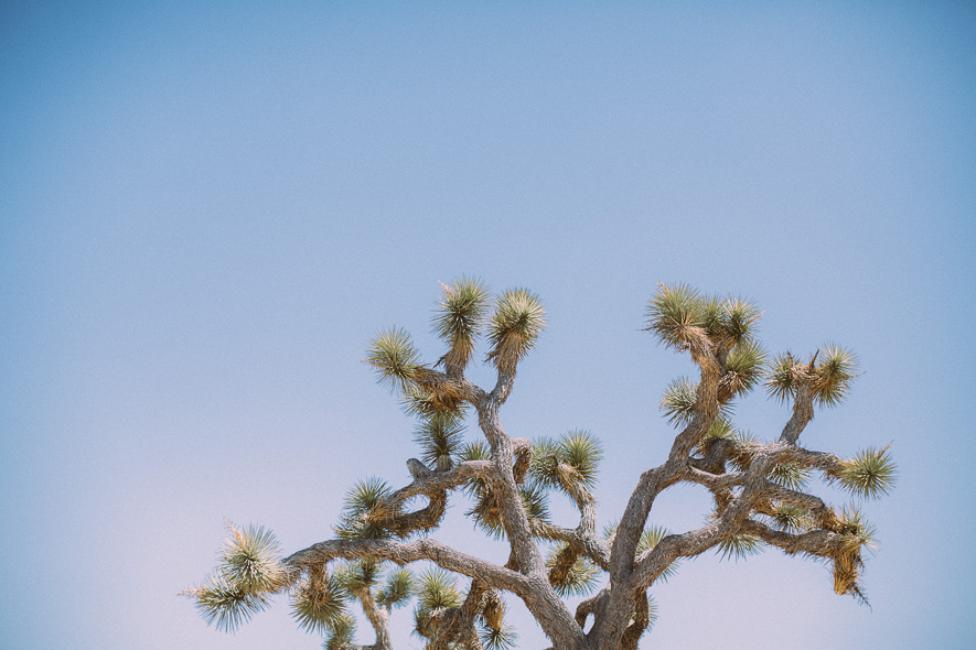 016_joshua_tree_national_park