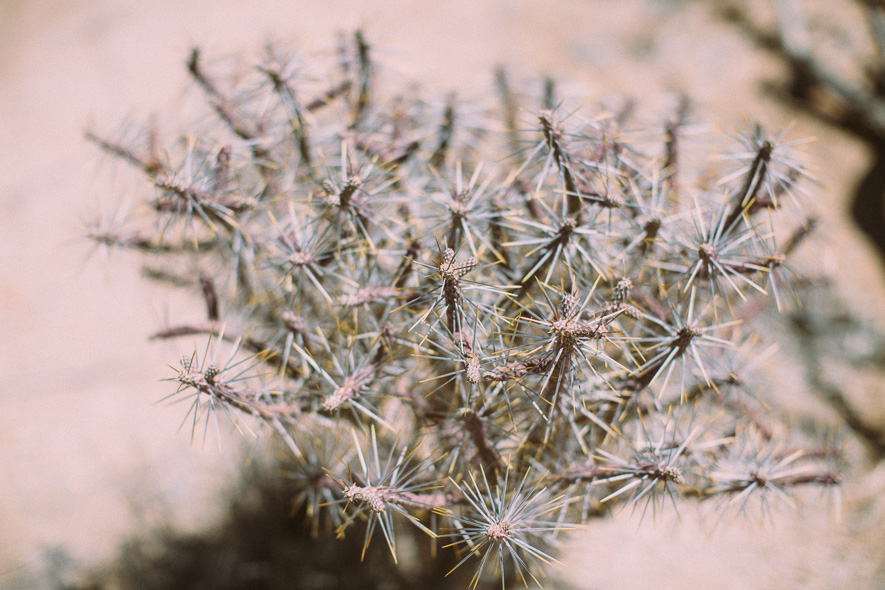 017_joshua_tree_national_park