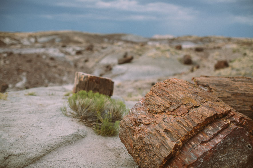 018_petrified_forest_national_park
