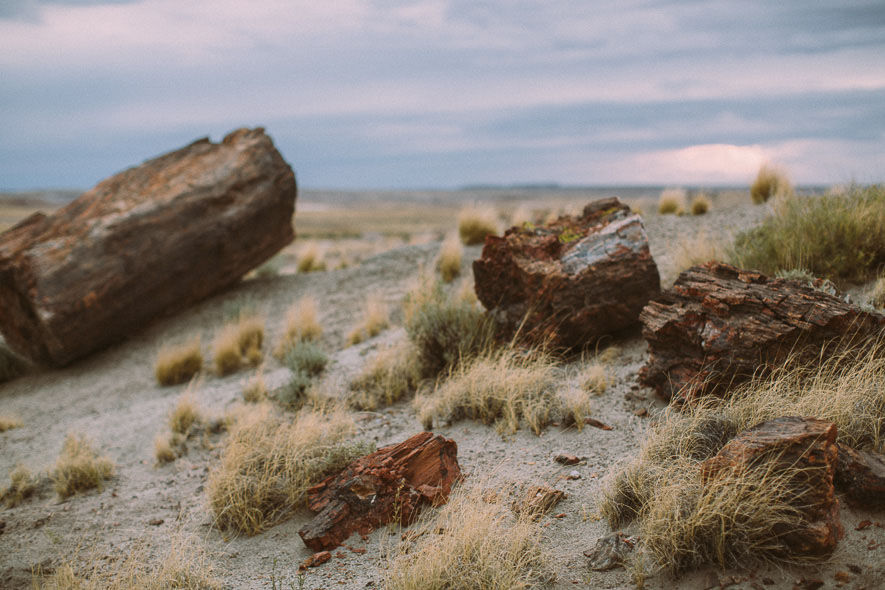 020_petrified_forest_national_park