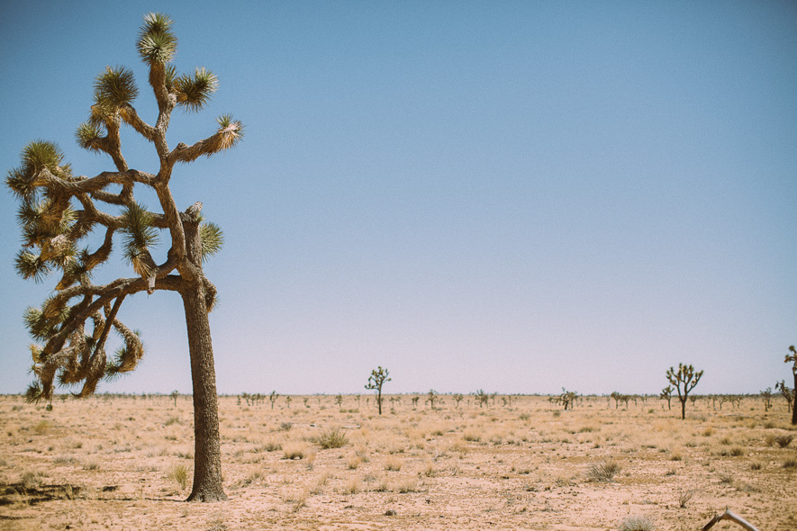 021_joshua_tree_national_park
