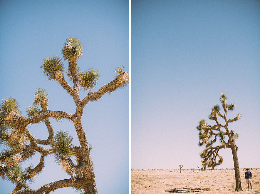 022_joshua_tree_national_park