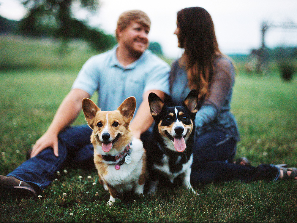 Corgi Engagement Photos